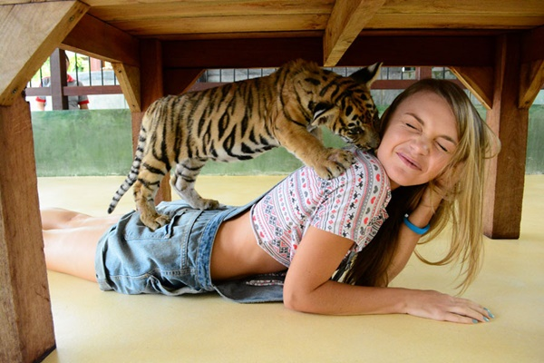 1469385716--phuket-tiger-kingdom-2