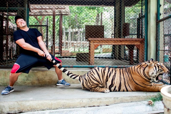 1469385716--phuket-tiger-kingdom-3