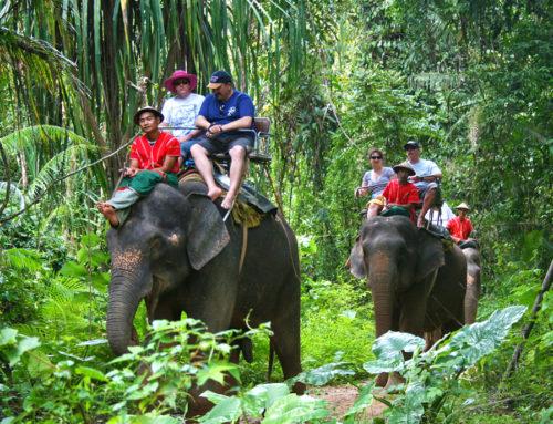 Elephant trekking 1 Hour