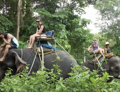 Elephant Trekking 30 Mins