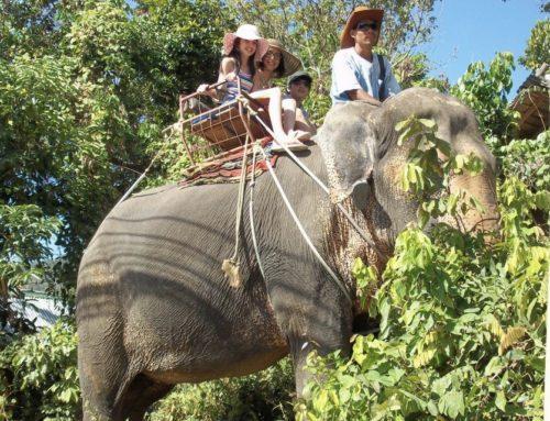 Elephant trekking 45 Mins